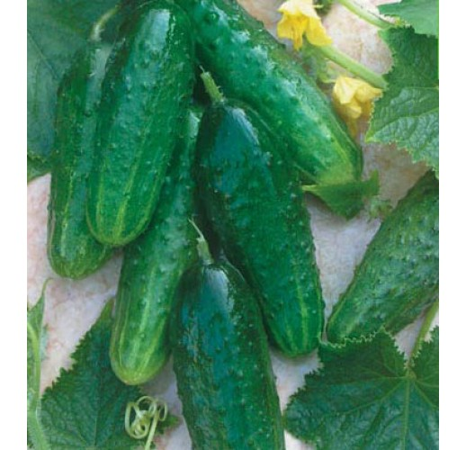 """Cucumbers """"Brigade"""""""