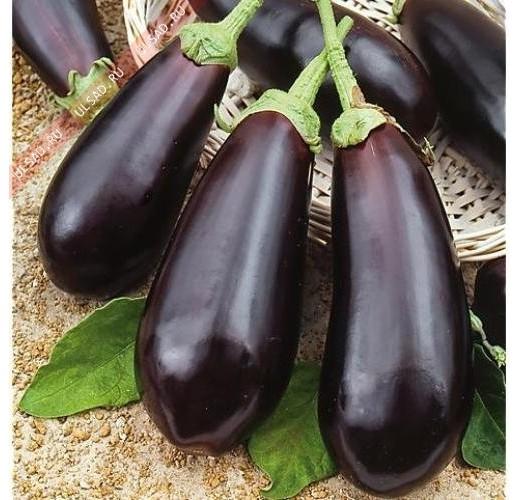 """Eggplant """"Diamond"""""""