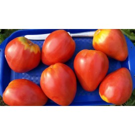 "Tomato ""Red Heart"""