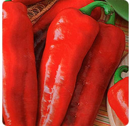 "Hot peper ""Red Fatty"""