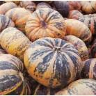 Pumpkin orange-pink