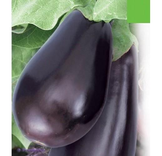 """Eggplant """"Vera"""""""