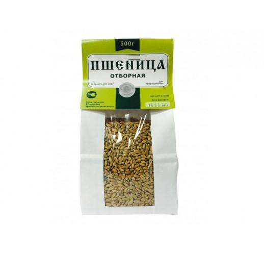 Organic wheat (RCoR)