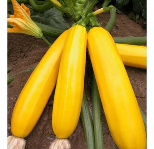 Zucchini yellow