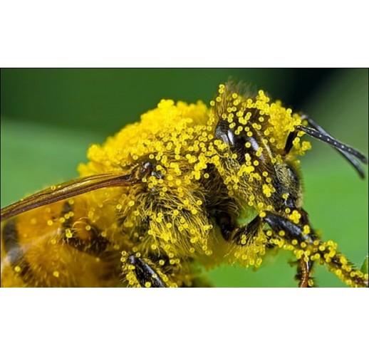 Bee pollen, 50 g