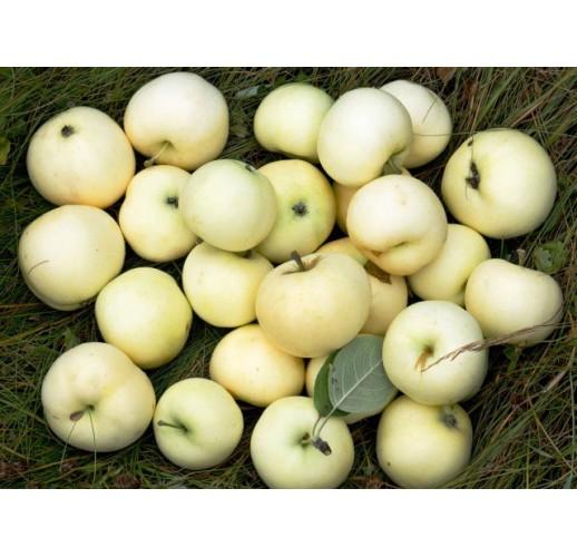 Apple White