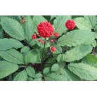 Ginseng seeds, (10 in a pack)