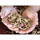 Ginseng roots, 100 g