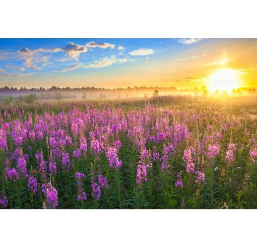Granulated Ivan-Chai / flowers