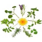Medicinal / culinary plants
