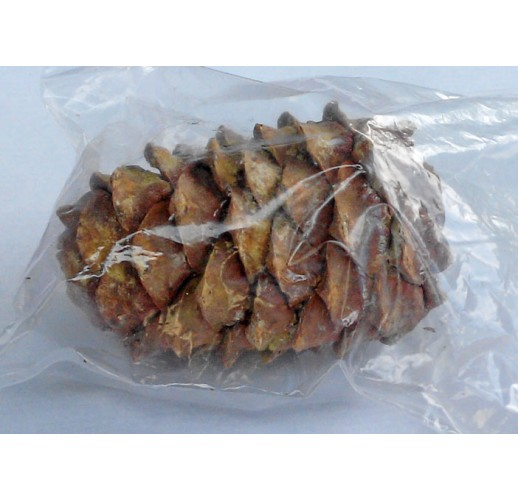 Cedar seed cone