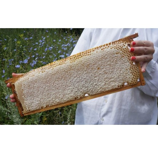 Comb honey in a frame