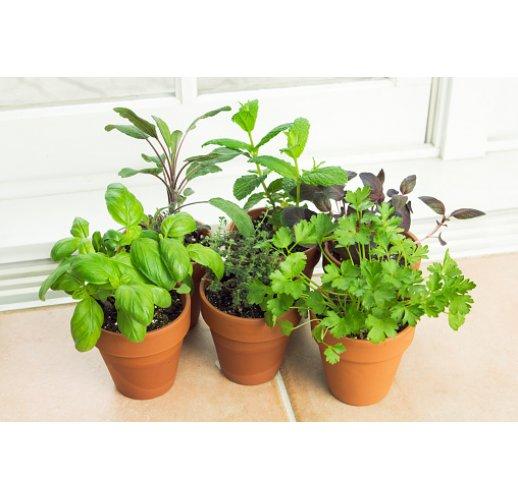 Spicy Herbs Kitchen garden kit